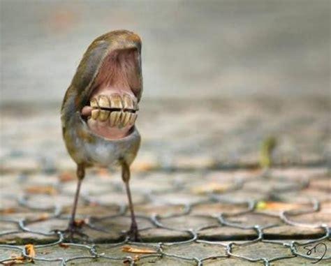 big mouth birds voegel mit grosser fresse