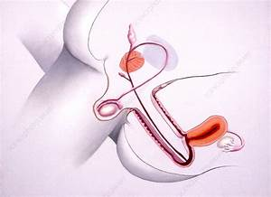 Sexual Intercourse - Stock Image P640  0057