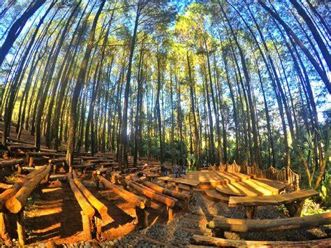 rute menuju hutan pinus mangunan  makin cantik