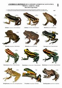 Reptiles Animals Names