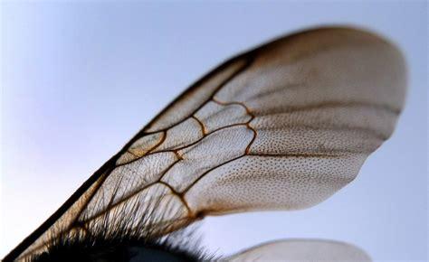 les humains responsables dune maladie qui decime les abeilles
