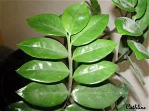 Plante Tropicale D Intérieur : plantes d 39 interieur ~ Melissatoandfro.com Idées de Décoration