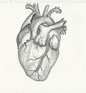 Human Heart Drawing | Design Inspiring | Pinterest | Human ...