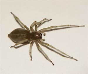 Hausmittel Gegen Spinnen : spinnen in der wohnung schnelle spinne imn der wohnung giftig gift spinnenart kleine schwarze ~ Whattoseeinmadrid.com Haus und Dekorationen