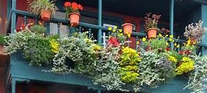 Balkonkasten Bepflanzen Südseite : balkonpflanzen welche pflanze gedeiht auf welchem balkon ~ Indierocktalk.com Haus und Dekorationen