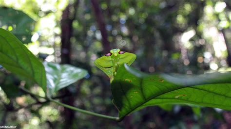 Rainforest insects