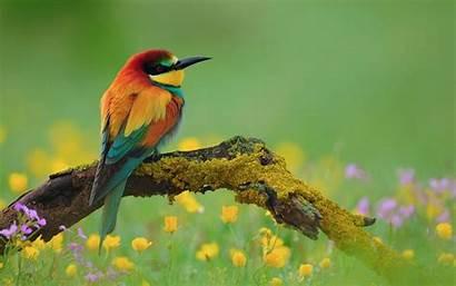 Bird Wallpapers Desktop Pixelstalk