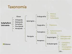 Hémiptéroïde : définition de hémiptéroïde