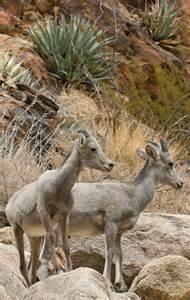 California Desert Animals