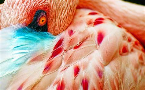 flamingo wallpapers hd pixelstalknet