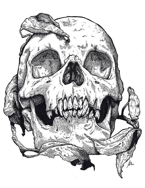 Best Images About Draw Skull Pinterest