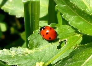 Insecte Qui Mange Le Bois : 301 moved permanently ~ Farleysfitness.com Idées de Décoration