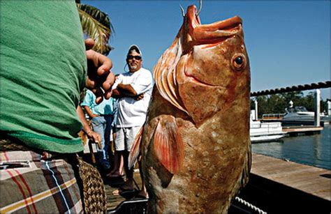 grouper fishing fish