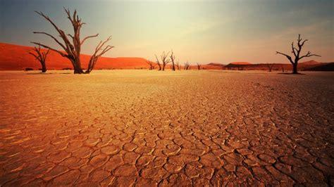 desierto arboles secos fondos de pantalla hd fondos de