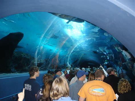 cichlids underneath the largest aquarium in the world
