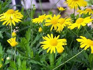 Vaste Planten - Soorten Vaste Planten