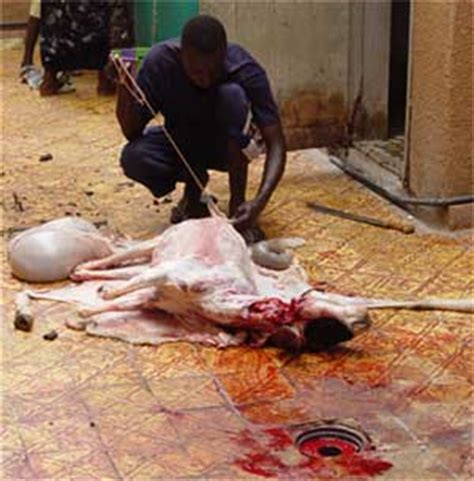 chinese woman killing  goat goat slaughter time youtube woman cited  dogs escape