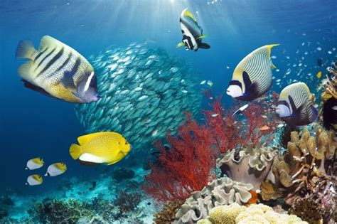 colorful saltwater fish colorful saltwater fish with coral reef the sea