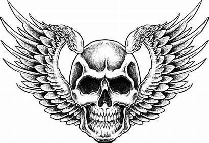 Skulls Skull Drawing Easy Human Draw Clipart