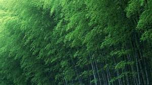 Green Bamboo Wallpapers