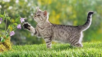 Cat Desktop Wallpapers Pet Cats Pc Background