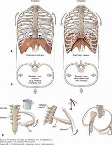 Alternative Medical Systems Chart 80 Best Systems Respiratory Images On Pinterest Nurses
