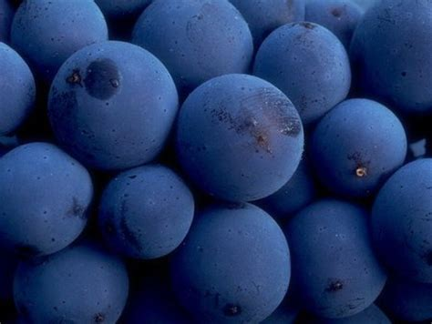 blueberries photography abstract background wallpapers