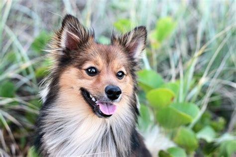 hundefutter fuer nierenkranke hunde neues wichtiges