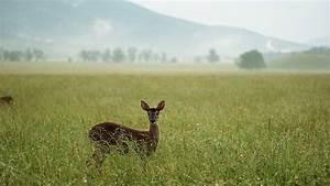 List Of Popular Grasslands Of The World Blog Examin