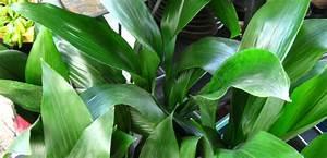 Plantas de interior para el hogar