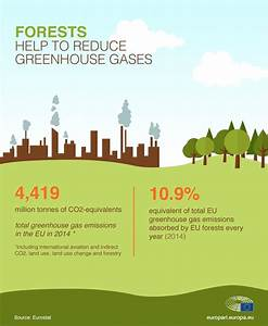 Climatechange  Using Eu Forests To Offset Carbon