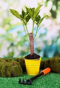 Langsam Wachsende Hecke : langsam wachsende buchsb ume ideal f r kleine g rten und zur terrassenbepflanzung ebay ~ Orissabook.com Haus und Dekorationen