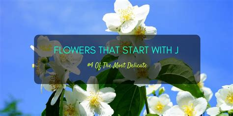 flowers start with a flowers that start with j flower inspiration