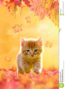 Cat Playing with Autumn Leaves