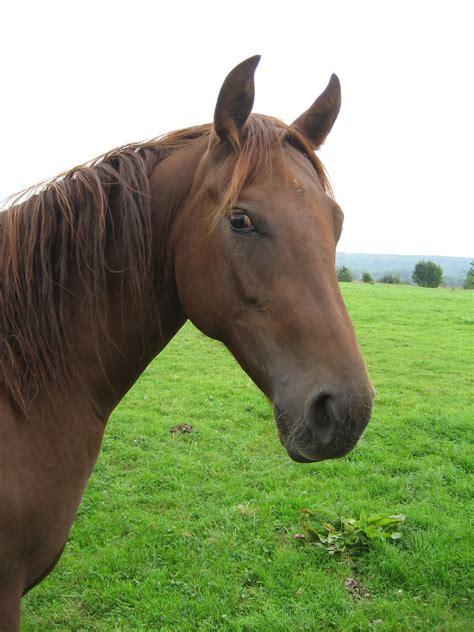 dangerous animals horses wild horse animal pets mane heros cute creatures colorful