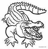 Alligator Coloring Pages Gator Florida Gators Printable Drawing Alligators Cute Cool2bkids Crocodile Animal Printables Drawings Whitesbelfast Clipartmag Paintingvalley Template Head sketch template
