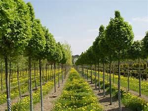 Schöne Bäume Für Garten : b ume garten punzmann gmbh menzlhof ~ Eleganceandgraceweddings.com Haus und Dekorationen