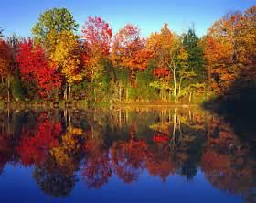 autumn trees connecticut color photograph radeka photography