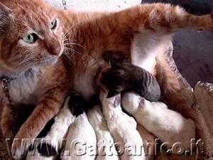 allattamento dei gatti gatta che allatta latte materno