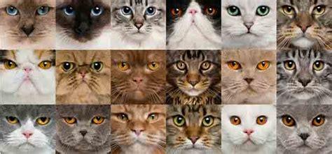 l 226 ge des chats et l esp 233 rance de vie du chat