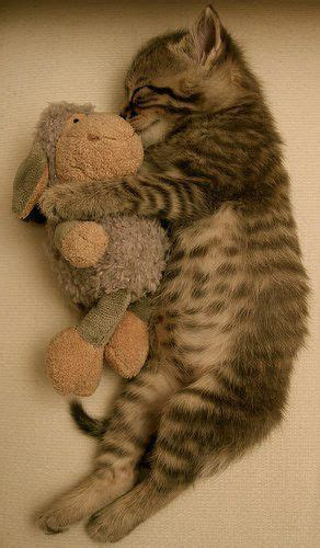 Funny Sleeping Cats  Cute Pictures & Videos Geniusbeauty