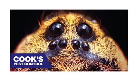 Cook's Pest Control Blog