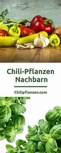 Paprika Gute Nachbarn : 1000 ideen zu chili pflanzen auf pinterest chili anbauen sommerpflanzen und google symbol ~ Frokenaadalensverden.com Haus und Dekorationen