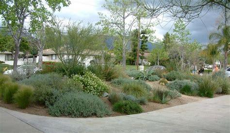 drought tolerant yards miller drought tolerant front yard