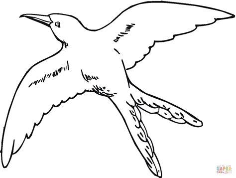 Dibujo De Colibr De Cola Partida Volando Para Colorear