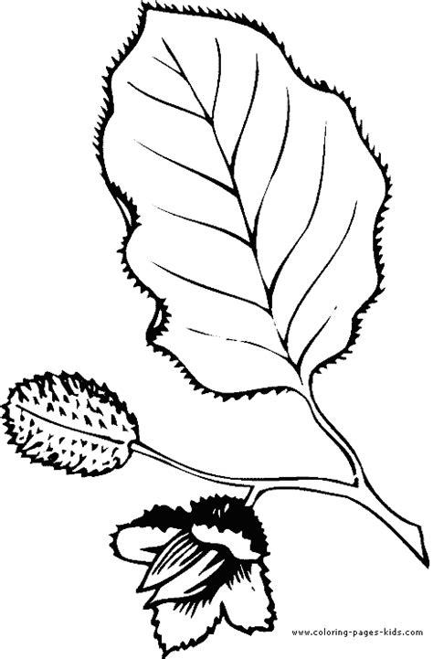 Kleurplaat Beukennootje by Leaf Color Page