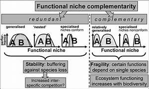 The Relationship Between Functional Niche Complementarity