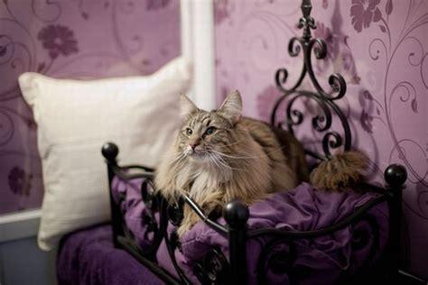 Longcroft Luxury Cat Hotel Provides True Hotel Style