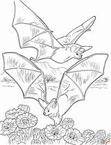 Bat Coloring Bats Pages Nectar Cave Gathering Printable Colouring Supercoloring Books Halloween Flying Butterfly Sheets Adult Pixels Animals 2800 2147 sketch template