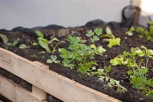 Hochbeet Aus Paletten Bauen : hochbeet aus paletten so bauen sie es selbst ~ Whattoseeinmadrid.com Haus und Dekorationen
